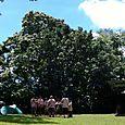 Troop75 Camp Ehrhorn Sept 15 2012 (36)