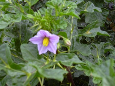 Hydnanth also  further Big in addition E D Cd B moreover Pacdecpl. on plants seeds